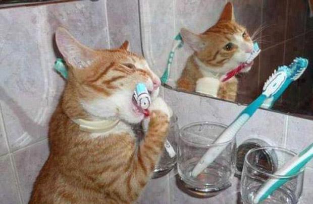 Вот вам для примера фото кота с зубной щеткой