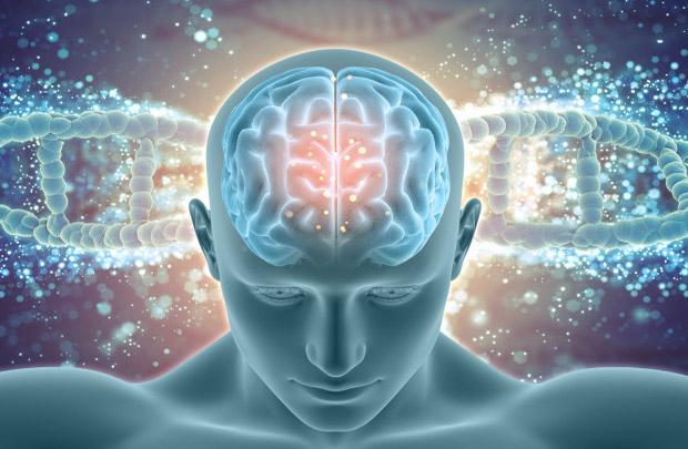 Использование левого полушария мозга